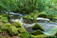 The River Fowey at Golitha Falls Royalty Free Stock Photo