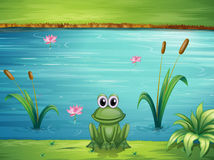 A river and a frog Stock Images