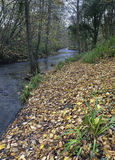River Frome in early winter Royalty Free Stock Photos