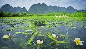 A river full of grass and flowers. And beautiful pastoral scenery Royalty Free Stock Photos