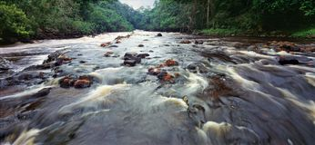 River in gabon. River in the jungle of gabon Stock Photos