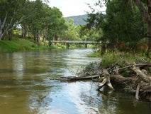 River and generic vegetation Royalty Free Stock Images