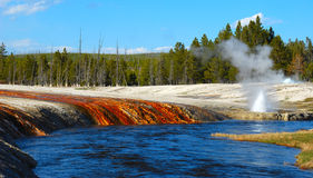 River Geyser. A steaming geyser plumes above the blue river in Yellowstone National Park in Wyoming Stock Image