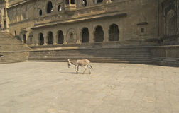 River Ghat and Donkey Royalty Free Stock Image
