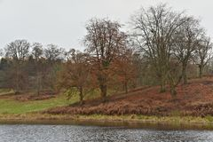 River Glyme and Forest on an Overcast Autumn Day Close to the Blenheim Palace stock photos