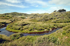 River going trough windswept coastal forest. Farewell Spit. South Island New Zealand Royalty Free Stock Photography
