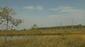 River in the gold autumn field. Smooth dolly shot.  stock footage