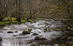 River in Grasmere royalty free stock photography