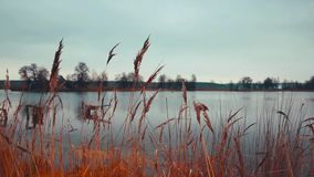 River and grass. Grass movement near the river stock video footage