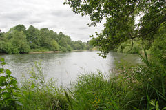 River with grass and trees under an overcast sky. Above the water Royalty Free Stock Images