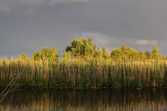 River and gray sky after a thunderstorm at sunset. Reeds are mirrored in the river Stock Photo