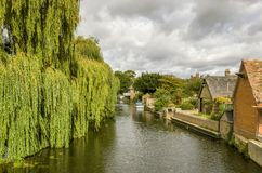 The river Great ouse in Godmanchester. Cambridgeshire, with a weeping willow tree and riverside buildings Stock Images