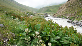 River at Greater Caucasus Mountain Range Stock Photography