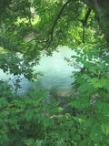 River green. Quiet green river in spring Royalty Free Stock Images