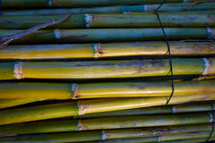 River green cane harvest texture pattern background Royalty Free Stock Photography
