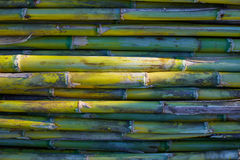 River green cane harvest texture pattern background Royalty Free Stock Photos