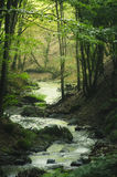 River in green fantasy forest royalty free stock photo