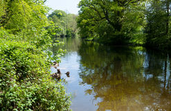 River in green forest stock photo