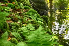 river in the green forest Royalty Free Stock Image