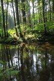 river in the green forest Royalty Free Stock Photography