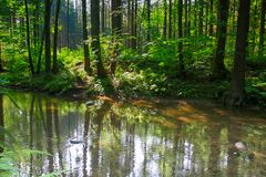river in the green forest Stock Photography