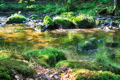 river in the green forest Stock Image
