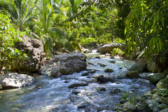 River in green jungle Stock Photo