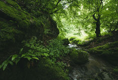 River in green jungle Royalty Free Stock Image