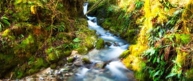 River with green leaves Royalty Free Stock Photos