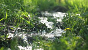 River on green meadow stock footage