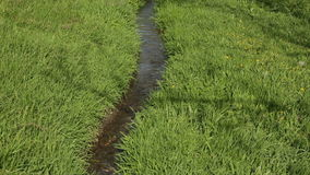 River on green meadow stock video