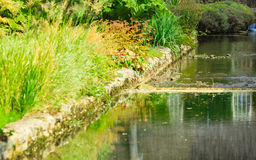 River with green plant on the shore Royalty Free Stock Photos