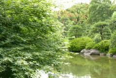 River, green plant, tree in Japanese zen garden Royalty Free Stock Images