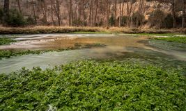 River green plants royalty free stock photos