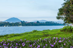 The river green trees and grass of hue in Vietnam Stock Image