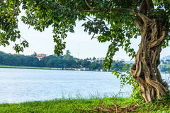 The river green trees and grass of hue in Vietnam Stock Photography