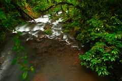 River in green tropic forest. La Paz Waterfall gardens, with green tropical forest in Costa Rica. Mountain tropic forest with rive Stock Photos