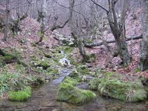 The river Grza in Serbia. The river Grza becomes of two rivers - Ivanštice and Male Cestobrodica. They are connected near the tunnel on the way Paraćin - Zaje stock images
