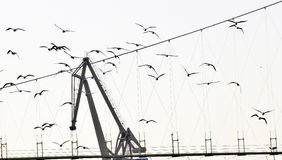 The river gulls flying with crane. The river gulls flying in the group and sky with crane royalty free stock image