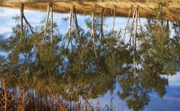 River gum trees reflecting in river Stock Photography