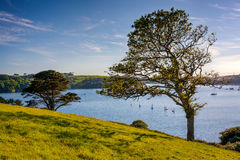 River Helford Cornwall Royalty Free Stock Photography