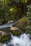 River Hermon ,Banias Nature Reserve in Israel Royalty Free Stock Photo