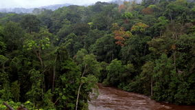 River hidden among the trees of wild tropical jungle. River in tropical jungle. River in Africa. Beautiful landscape. Equator. Equatorial Guinea. River hidden stock video
