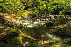 River in Hirkan national park in Lankaran Azerbaijan Royalty Free Stock Images