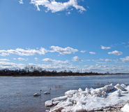 The river and ice Royalty Free Stock Images