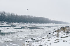 River with ice drifting and bare forest visible on other side Royalty Free Stock Photo