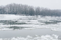 River with ice drifting and bare forest visible on other side Royalty Free Stock Image
