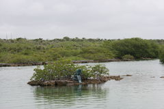 Mexico Lagoon. That we snorkeled in while on vacation Stock Photography