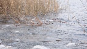 River, ice and reed and small water waves stock video