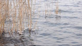 River, ice and reed and small water waves stock footage